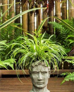 boyali-heykel-saksi-amp-bitki-ff00