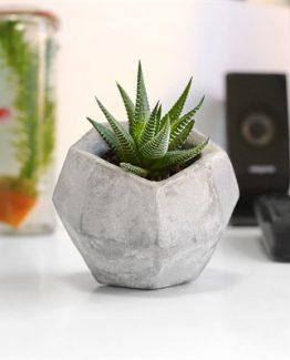 elmas-beton-saksi-amp-sukulent-hediyeli-b1e3
