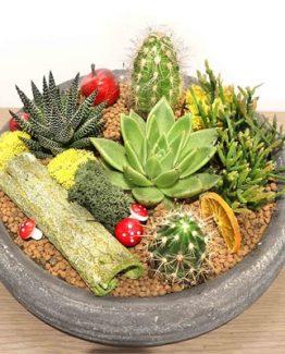 sukulent-amp-kaktus-bahcesi-2-65d5